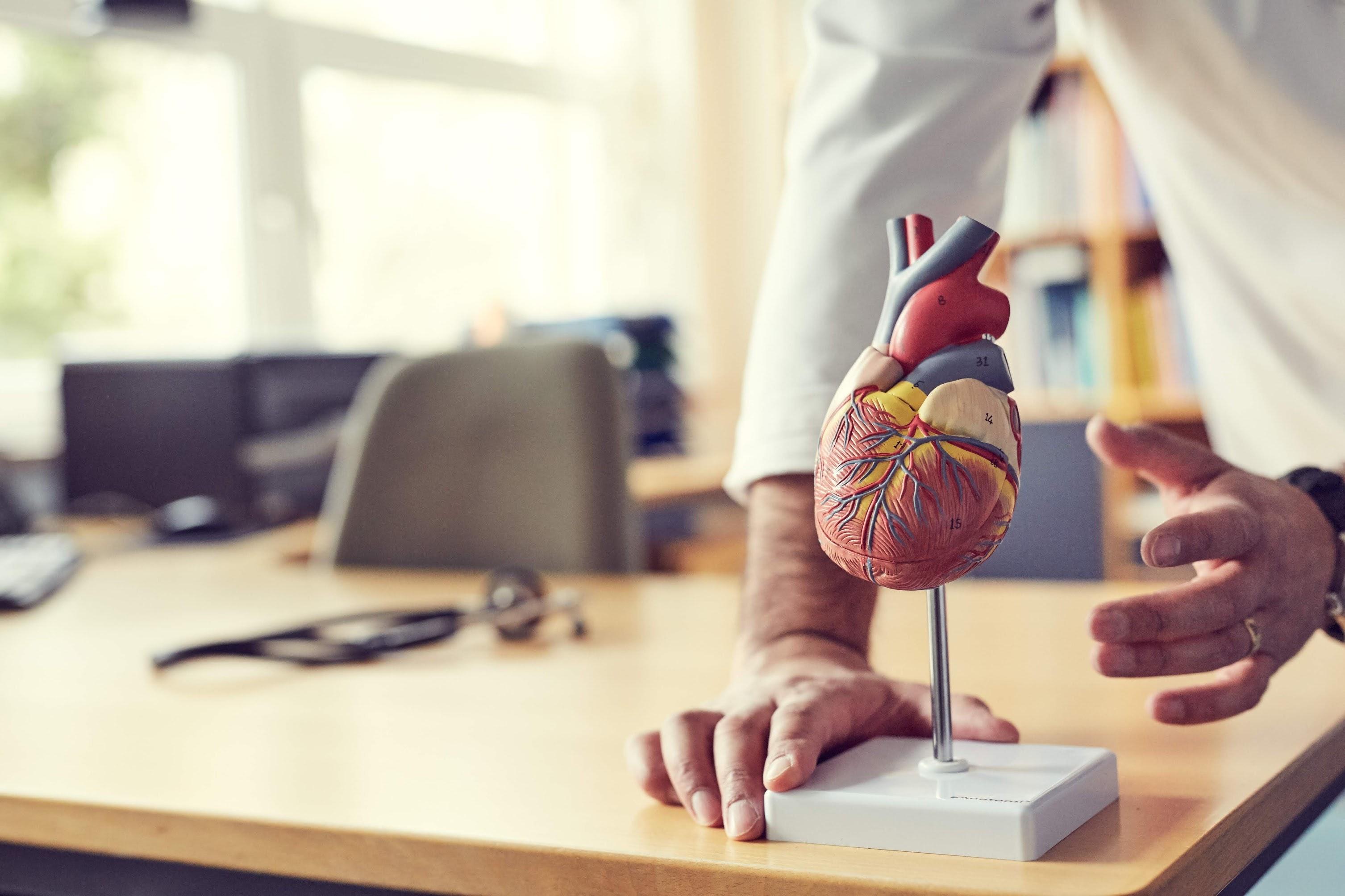 Klassisk hjertemodel i realistisk størrelse