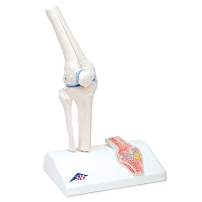 Mini knæled med tværsnit