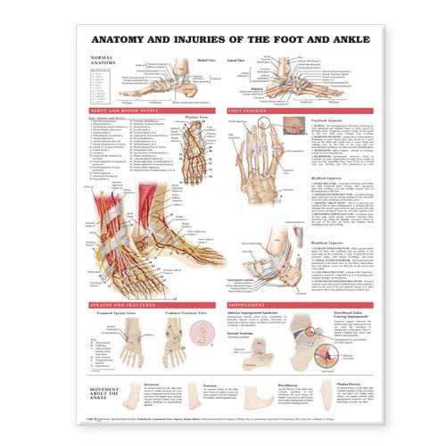 Plakat om fodens anatomi & skader på engelsk