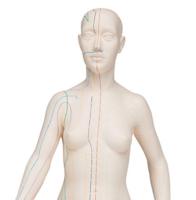 Akupunkturmodell 70cm til profesjonelt bruk