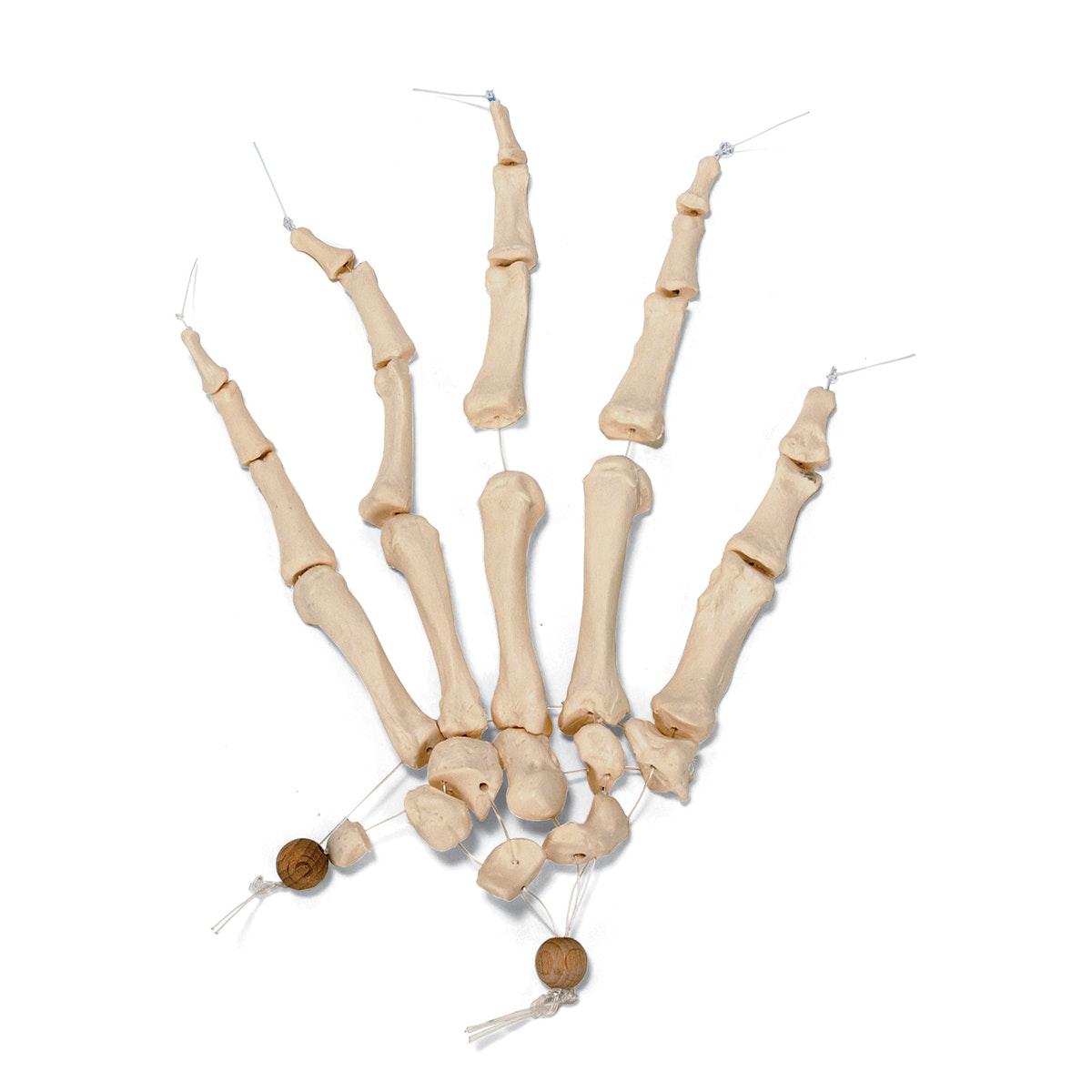 Med hånd & fod samlet på nylon