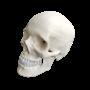 Inkl. de durale septa som eksempelvis falx cerebri fra dura mater
