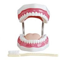 Kraftig forstørret og fleksibelt gebis/tandmodel inkl. forstørret tandbørste