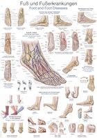 Plakat om fodens anatomi & sygdomme på tysk og engelsk