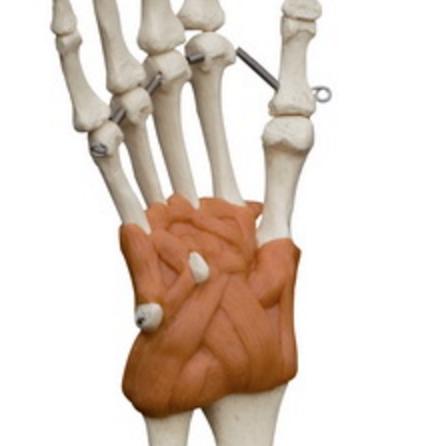 Hånd og albue med ledbånd