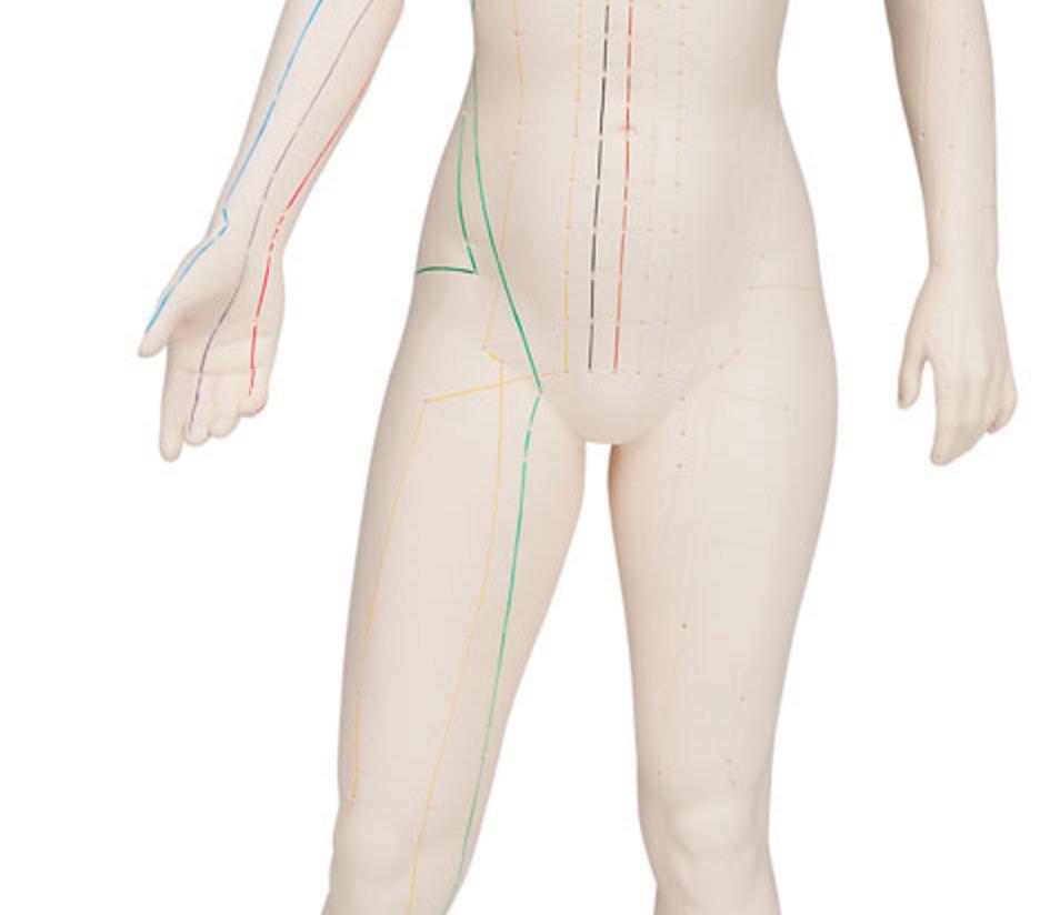 Kvindelig akupunkturmodel 70 centimeter til professionel brug
