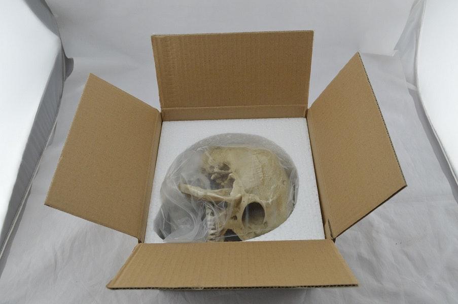 Hamlet kraniemodel