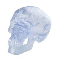 Transparent kranium i tre delar