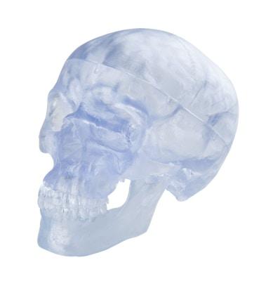 Gennemsigtig kraniemodel som kan deles i 3. Kan også indeholde en hjernemodel som kan ses udefra