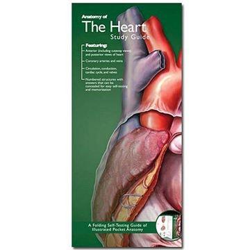 Anatomisk folder om hjertet, blodtryk, EKG m.m. på engelsk