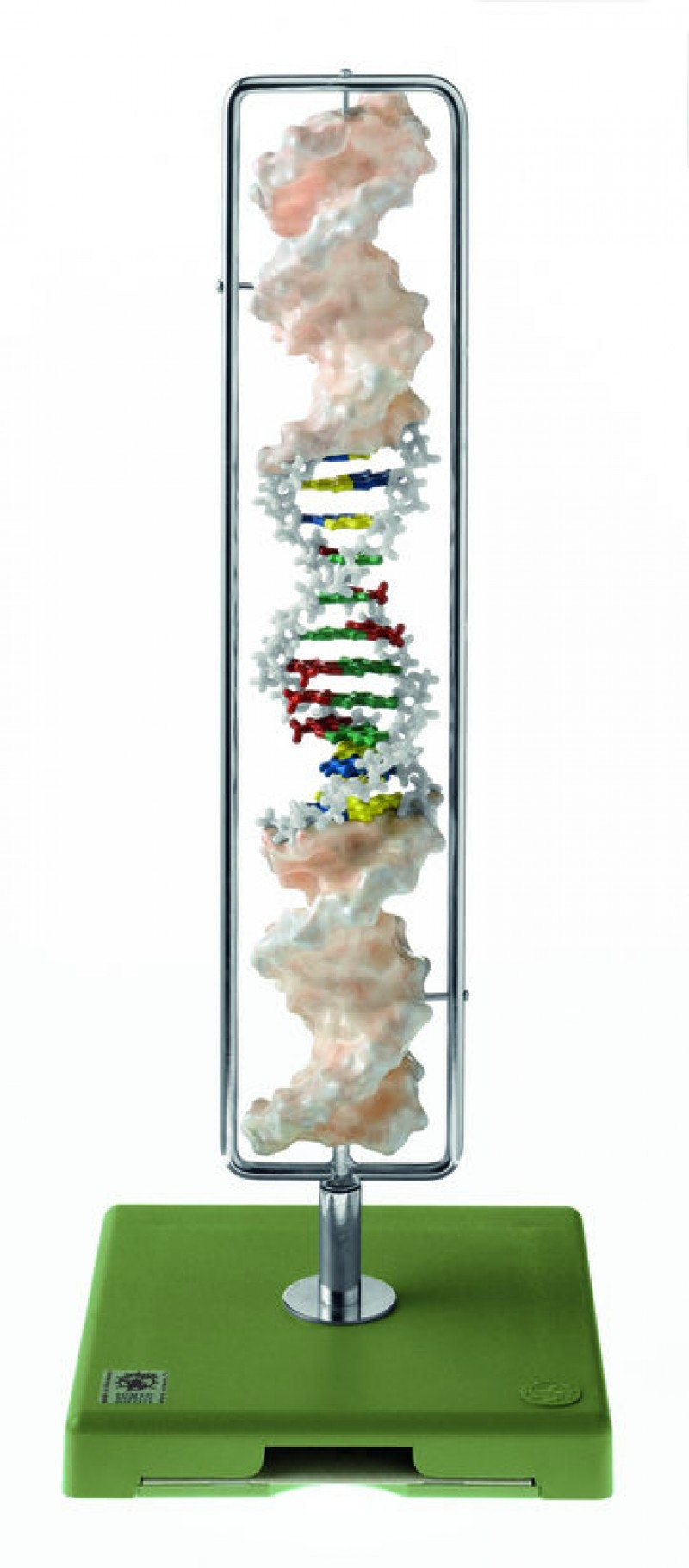 SOMSO DNA dobbel helix model