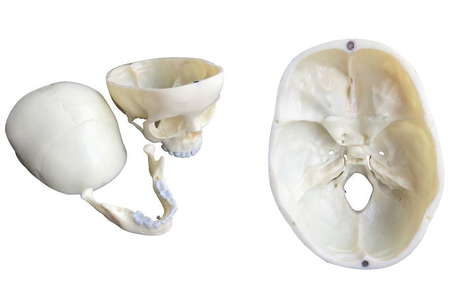 knoglesamling i plastik af 5-årig