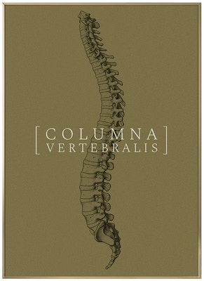 Anatomisk kunstplakat CLASSIC3