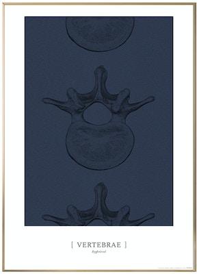 Anatomisk kunstplakat CLASSIC19