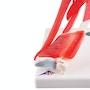 Fleksibel albuemodel med mange muskler, som kan afmonteres