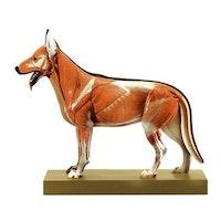 SOMSO Modell av en sau-hund