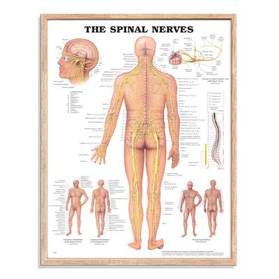Plakat inklusiv ramme i naturlig egetræ