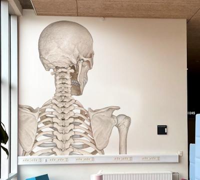 Skelet Mega Folie - Bagfra