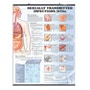 Lamineret plakat om alle de vigtigste kønssygdomme med tekst på engelsk