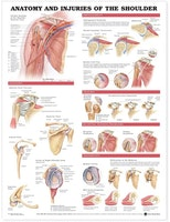 Plakat om skulderens anatomi & skader på engelsk