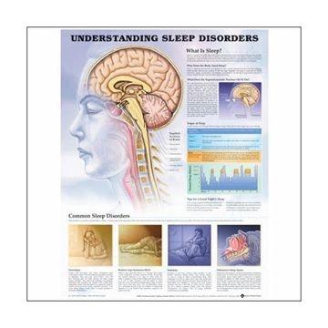 Forstå søvnforstyrrelser lamineret plakat engelsk (understanding sleep disorders)
