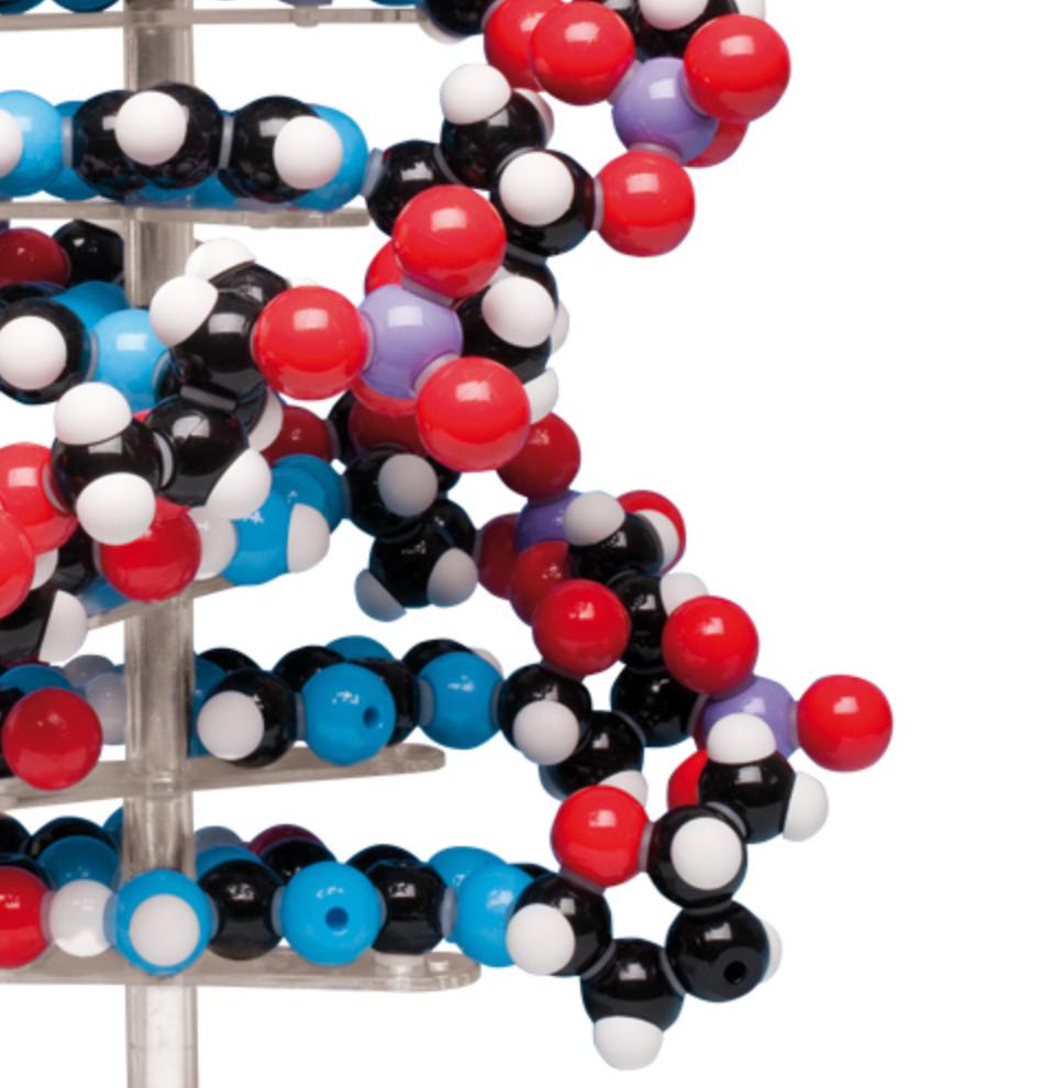 Stor DNA model leveres som samlesæt