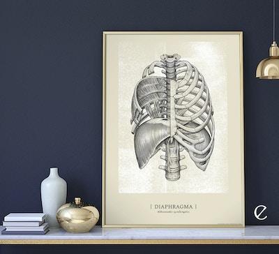 Anatomiske kunstplakater