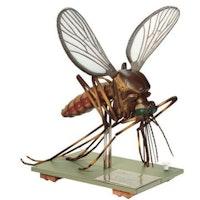 SOMSO modell av en mygg