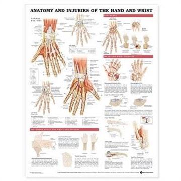 Håndplakat Anatomi & skader lamineret engelsk (Anatomy & injuries of the hand & wrist)