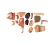 Avlssvin i højeste kvalitet og cirka halv naturlig størrelse. Kan adskilles i 17 dele