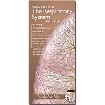 Lamineret folder om åndedrætssystemets anatomi på engelsk