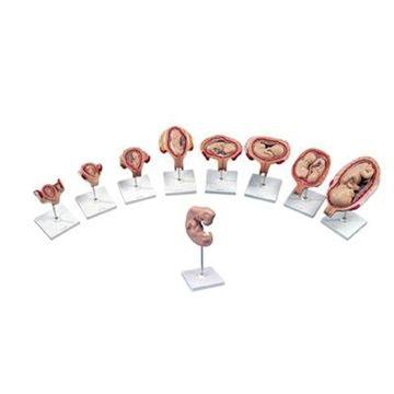 Luksus graviditetsserie med 9 modeller