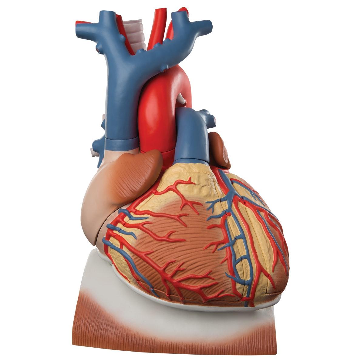 Hjerte på mellemgulv, 3 x normalstørrelse, 10 dele