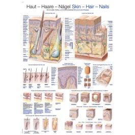 Hår-Hud-Negle plakat på engelsk og tysk