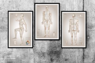Klinikudgaven - sæt med 3 plakater der alle måler 61 x 91 cm