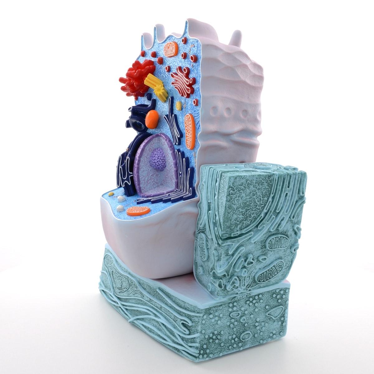 Meget detaljeret model af en celle i et elektronmikroskopisk perspektiv