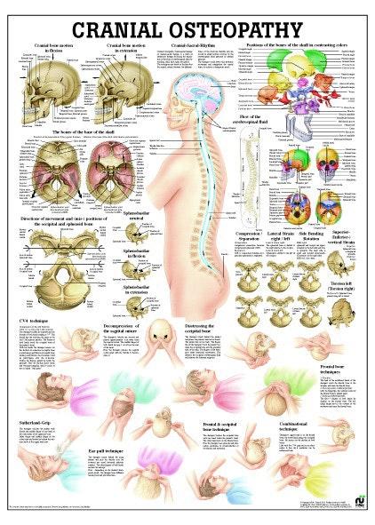 Plakat om Kranio Sakral terapi på engelsk