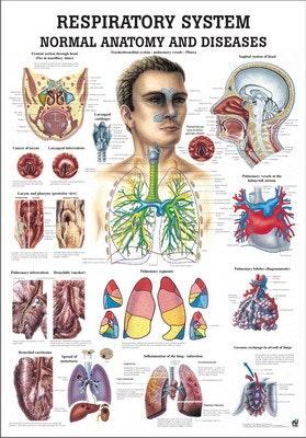 Lamineret plakat om åndedrætssystemets anatomi og sygdomme på engelsk