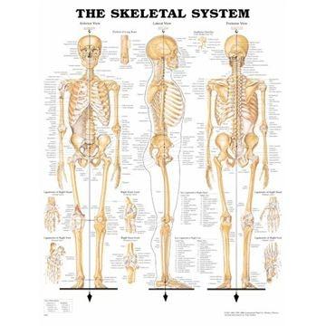 Skeletplakater