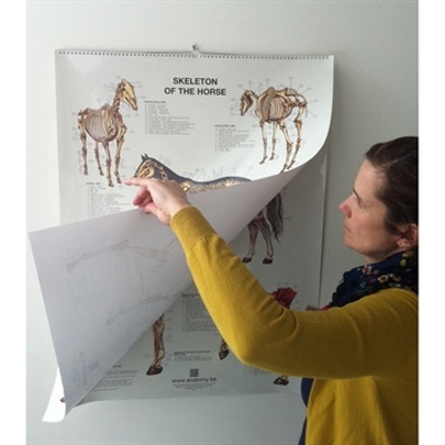 6 plakater med hestens organer og væv fra skelettet til ydersiden på latin og engelsk-latin