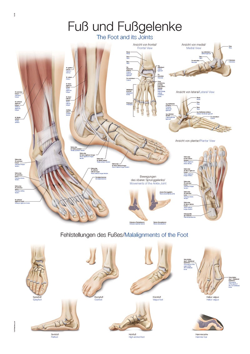 Plakat om foden på engelsk og tysk