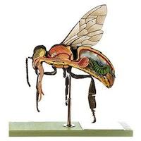 Honningbi (Apis mellifera) i højeste kvalitet, kraftig forstørret og med bevægelighed i det ene ben