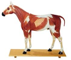 Hestemodeller