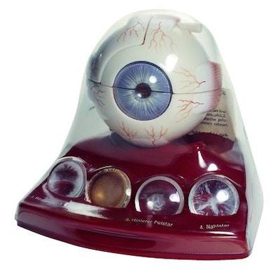 SOMSO Katarakt øje model