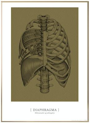 Anatomisk kunstplakat CLASSIC11T
