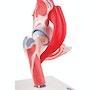 Fleksibel hoftemodel med muskler som kan adskilles i 7 dele