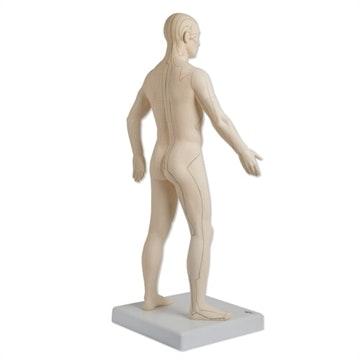 Akupunkturmodel 70 centimeter til professionel brug