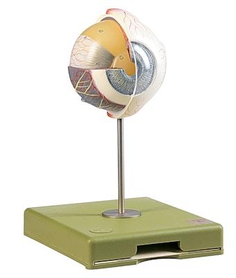 SOMSO Øjeæble model