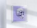Anatomisk kunstplakat POP2T