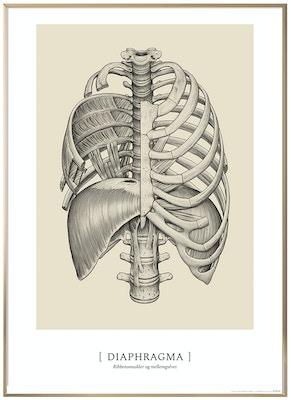 Anatomisk kunstplakat CLASSIC7T